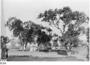 Beltana Workmen's Camp 1885