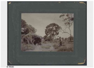 Bushman's camp in Ferguson Gorge near Wilpena Pound around 1920
