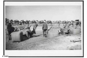 Camel train, with wool from Nappamerry Station in Queensland being unloaded at Farina Railway Station, 1928