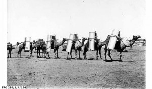 This team is heading inland from Port Augusta with heavy loads of metal sheeting, about 1907.